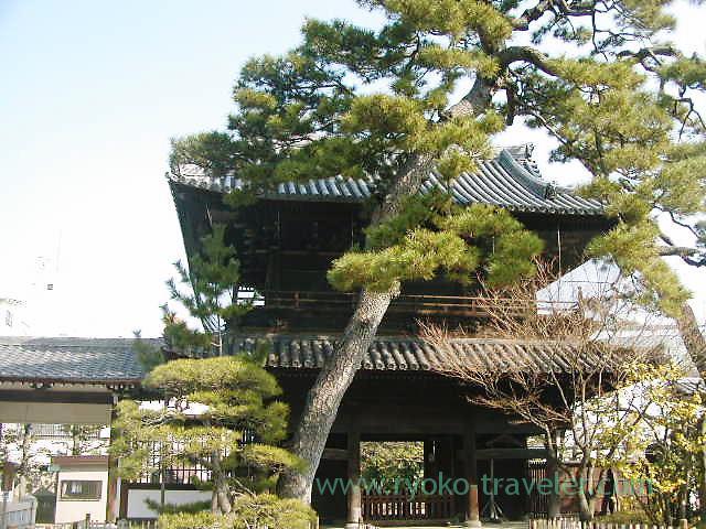 pine tree2, Sengakuji temple (Sengakuji)