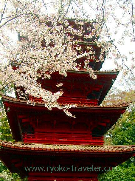 Five pagoda and cherry blossoms, Hokekyo-ji (Shimousa Nakayama)