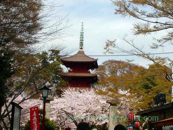 Five storied pagoda and cherry blossom, Hokekyo-ji (Shimousa Nakayama)