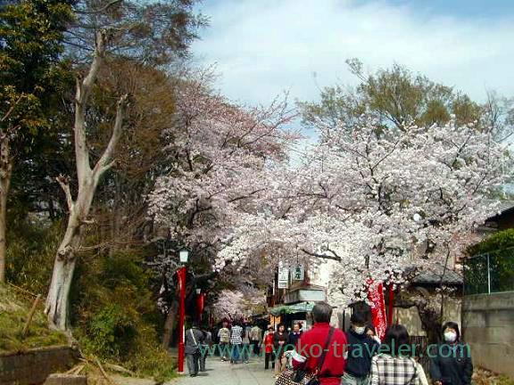 Street, Hokekyo-ji (Shimousa Nakayama)