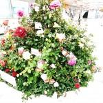 Funabashi : Roses