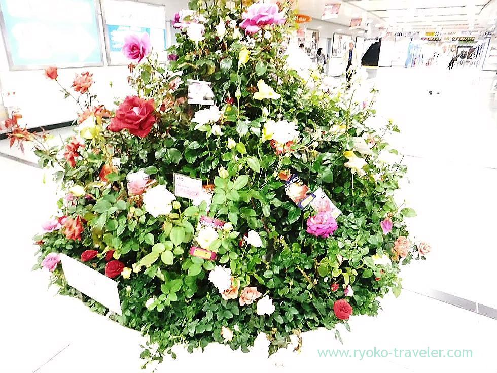 Roses1, Keisei Funabashi station (Funabashi)