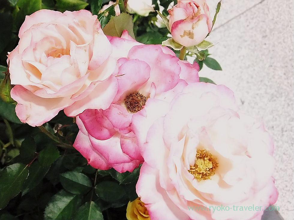 Roses2, Keisei Funabashi station (Funabashi)
