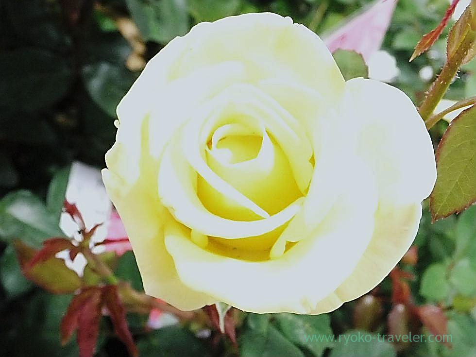 Roses3, Keisei Funabashi station (Funabashi)