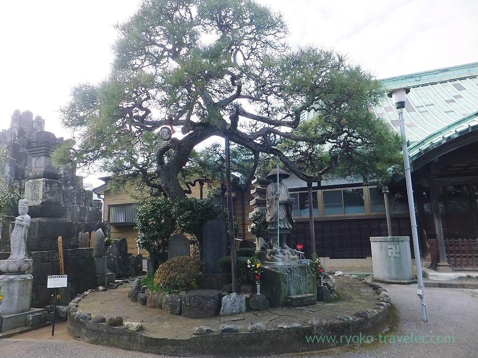 Ginkgo nut tree, Tozenji temple , Narashino Shichifukujin2012 (Tsudanuma)