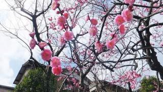 Keisei Okubo : Narashino plum grove park 2012