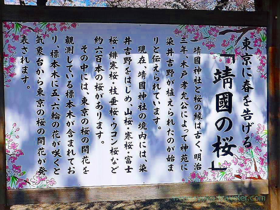 About cherry blossoms of Yasukuni, Yasukuni Jinja shrine (Ichigaya)