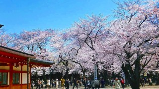 Yasukuni Jinja shrine Sakura festival 2012 (靖国神社)