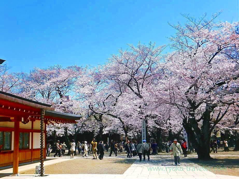Cherry blossoms festival 2, Yasukuni Jinja shrine (Ichigaya)