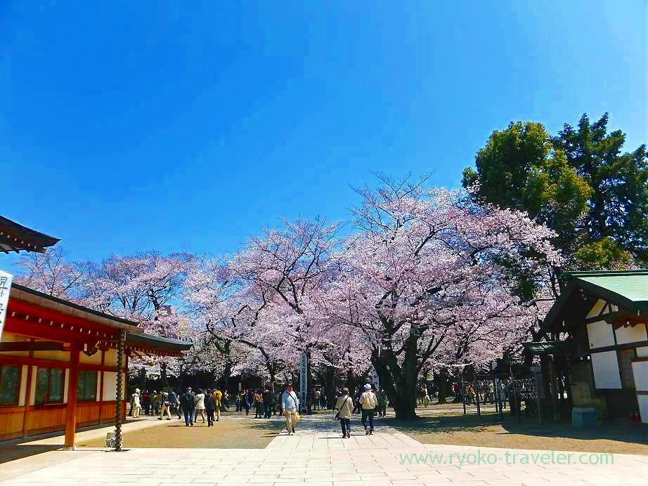 Cherry blossoms festival 5, Yasukuni Jinja shrine (Ichigaya)