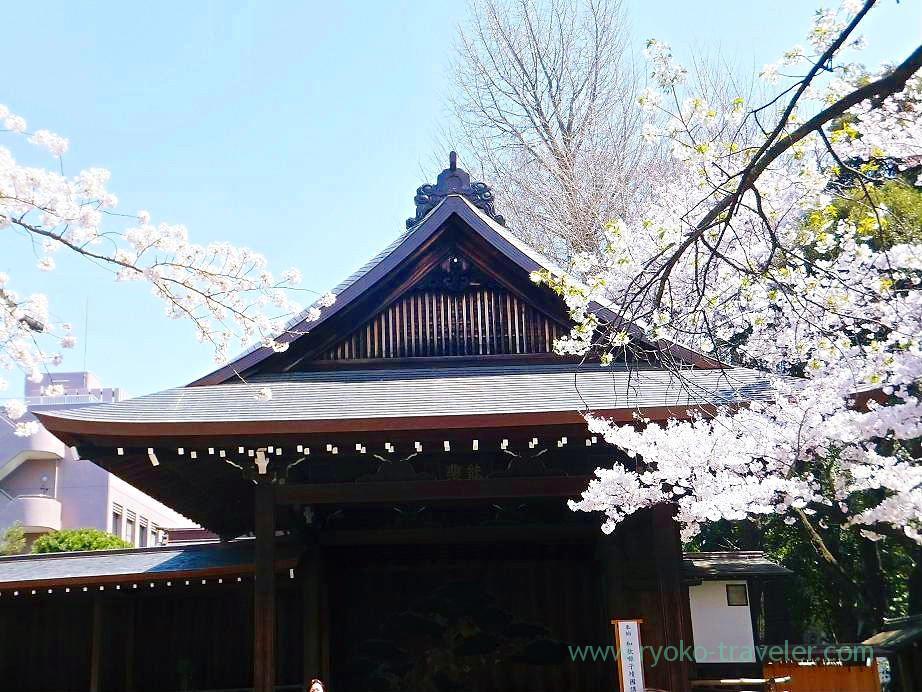 Cherry blossoms festival 6, Yasukuni Jinja shrine (Ichigaya)