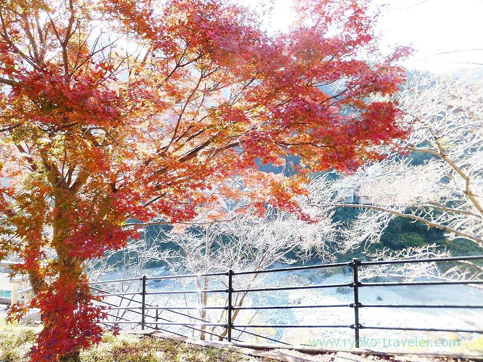 Autumn leaves, Oboke station, Oboke (Kagawa & Tokushima 2011)
