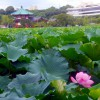 Ueno, Yushima : Ueno Onshi park, Iwasaki garden and Sichuan dandan noodles