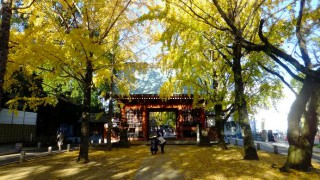 Motoyawata : Gingko trees promnade in Katsushika Hachimangu shrine