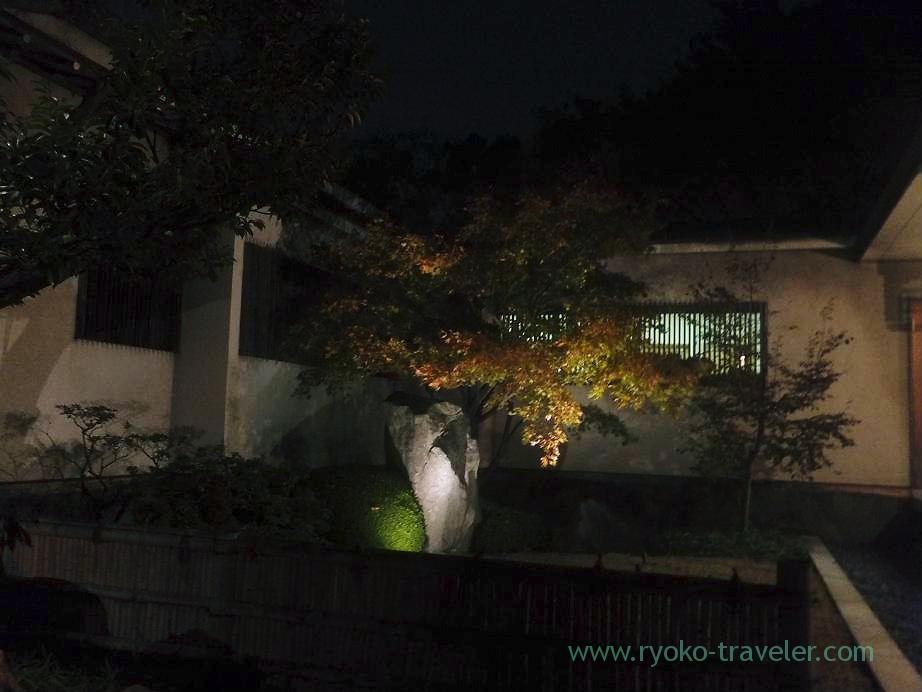 Light up Kiyosumi Garden in Autumn 2,(Kiyosumi-shirakawa)