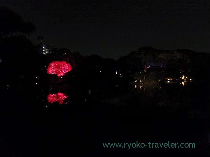 Light up Kiyosumi Garden in Autumn 4,(Kiyosumi-shirakawa)