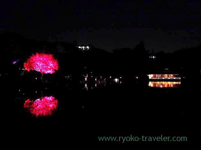 Light up Kiyosumi Garden in Autumn 5,(Kiyosumi-shirakawa)