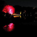 Kiyosumi-Shirakawa : Illumination of Kiyosumi Teien