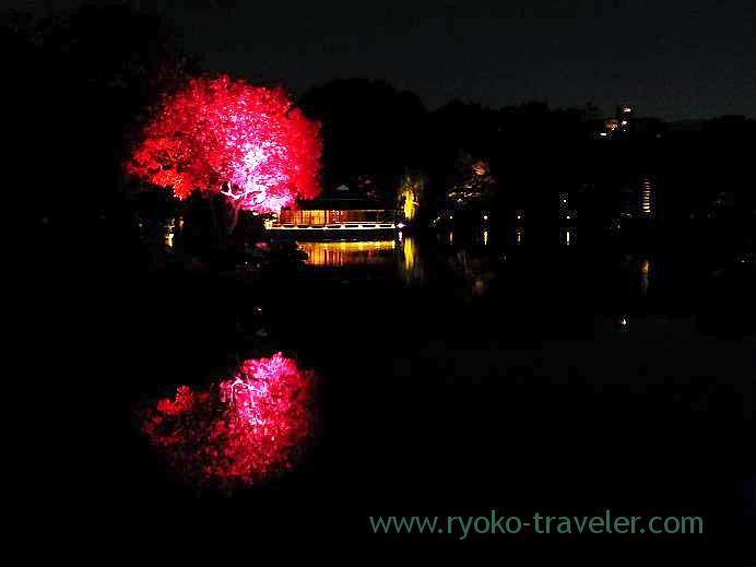 Light up Kiyosumi Garden in Autumn 6,(Kiyosumi-shirakawa)