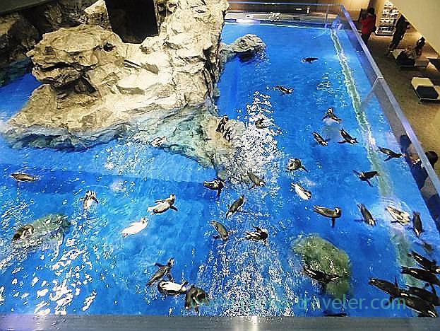 Penguins, Sumida Aquarium (Tokyo Skytree Town)