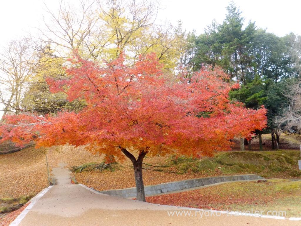 Autumn leaves1, Todaiji temple (Nara)