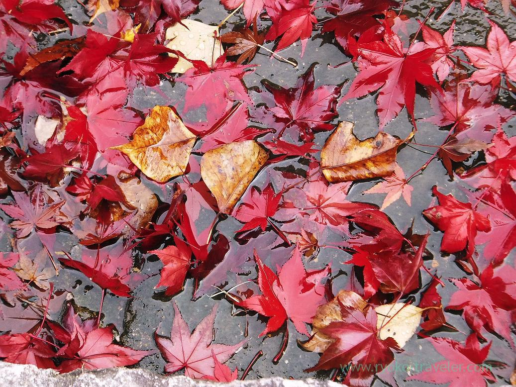 Fallen leaves closer, Nara Park (Nara)
