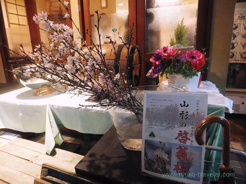 Keio-zakura, one kind of cherry blossom, Persil (Higashi-Ginza)