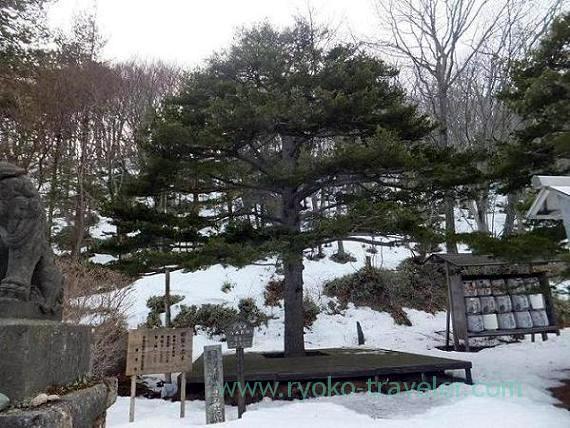 Famous tree in Nasu, Onsen Jinja shrine (Nasu kogen)