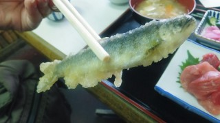 Tsukiji Market : Tenfusa started to serving young ayu !