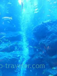 Bubble, Sumida Aquarium (Tokyo Skytree Town)