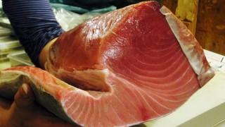 Tsukiji : Tremendous yellowfin tuna at Kashigashira (河岸頭)
