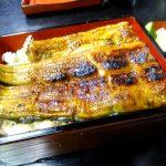 Hatsudai : Precious eels at Akagaki (赤垣)