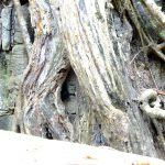 Siem Reap 2014 (7/8) : Ta Prohm and lunch