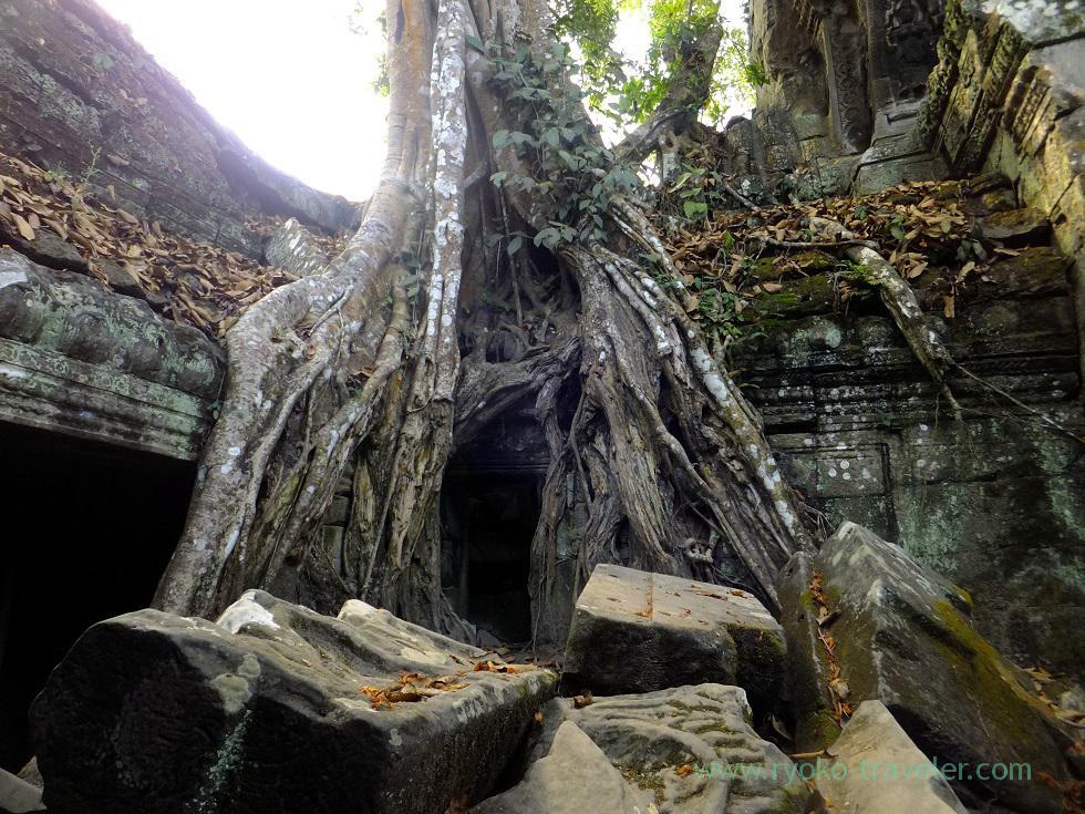 Ta Prohm 3(Siem Reap2014)