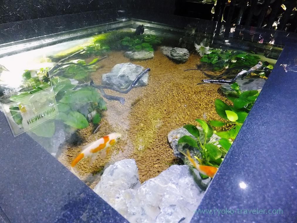 Fishes in the water, Midori-no-hoshi (Yatsu)