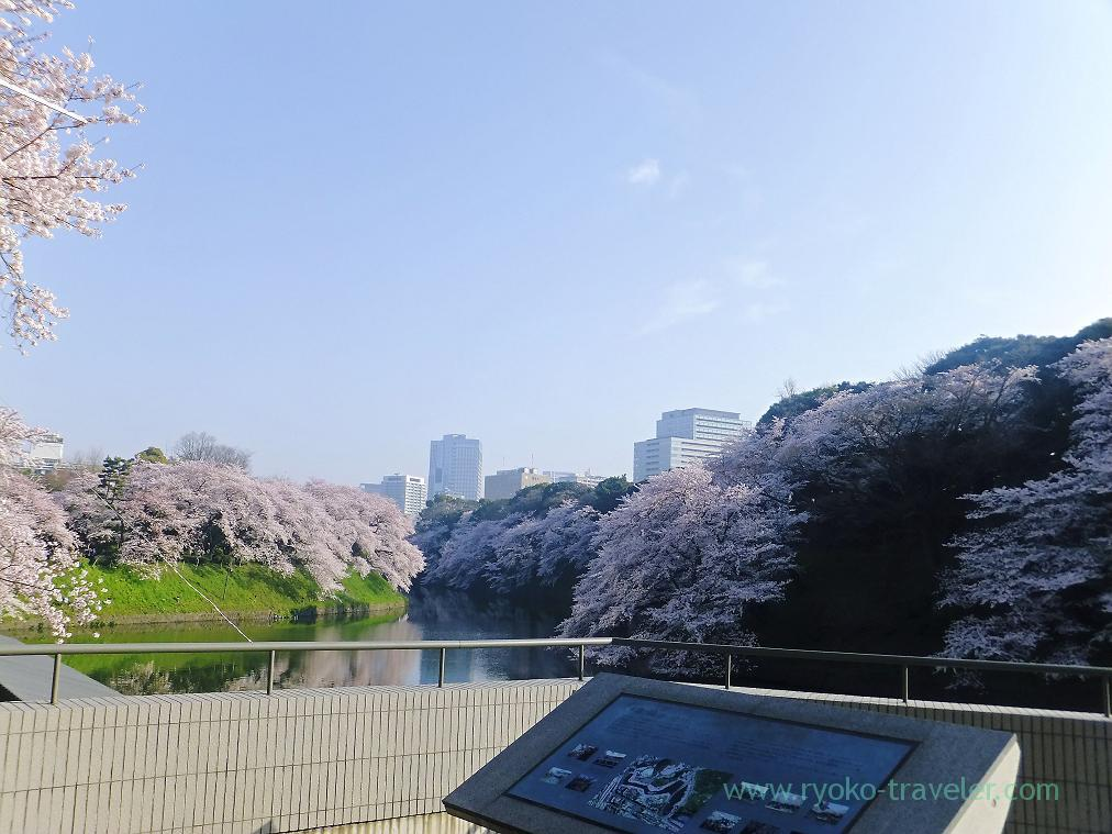 Cherry blossoms, moats and tall buildings, Chidorigafuchi (Kudanshita)