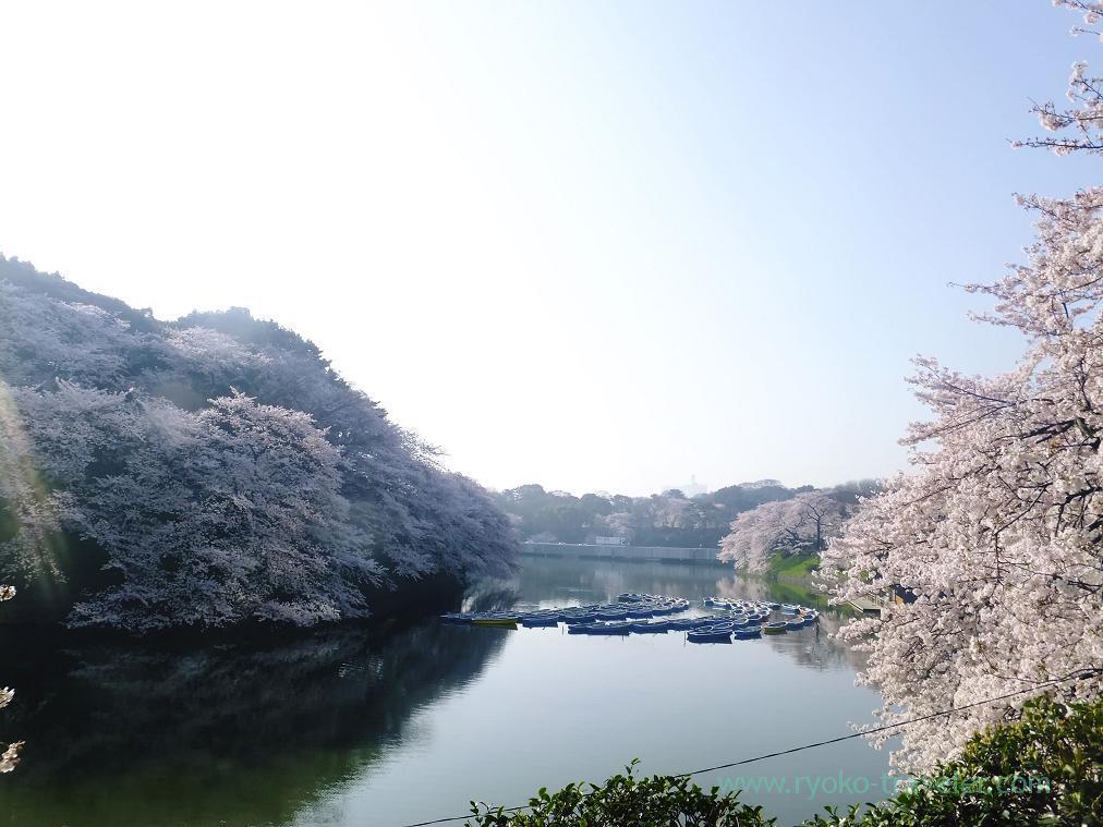 So much flowers, Chidorigafuchi (Kudanshita)