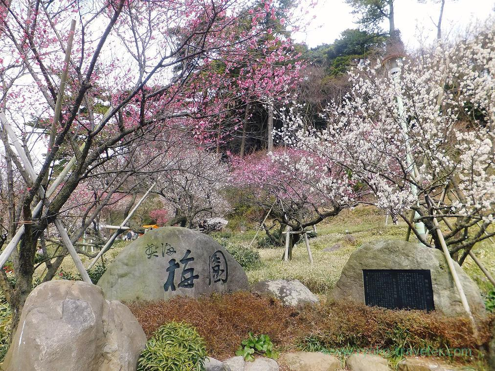 (Trip to Izu 2015 to see the earliest plum blossoms in Kanto area ) Entrance, Atami Baien (Kinomiya)