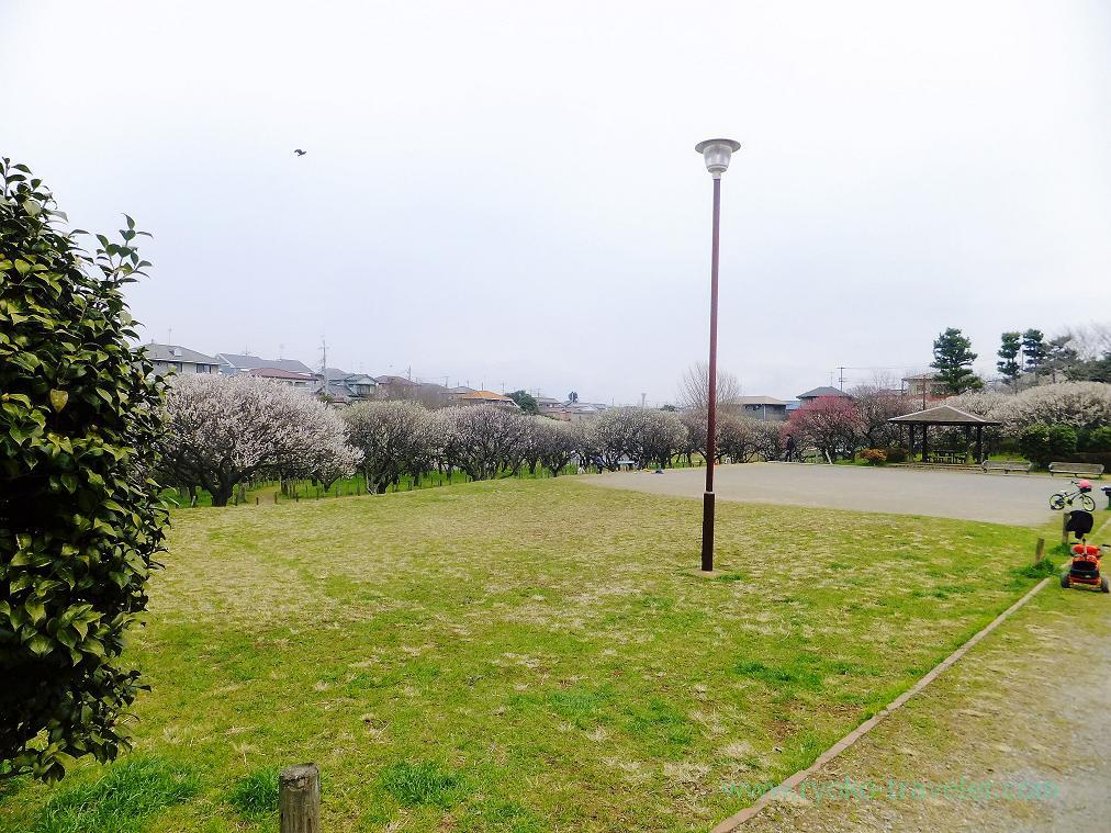 Whole view, Narashino Bairinen, plum grove park (Keisei-Okubo)