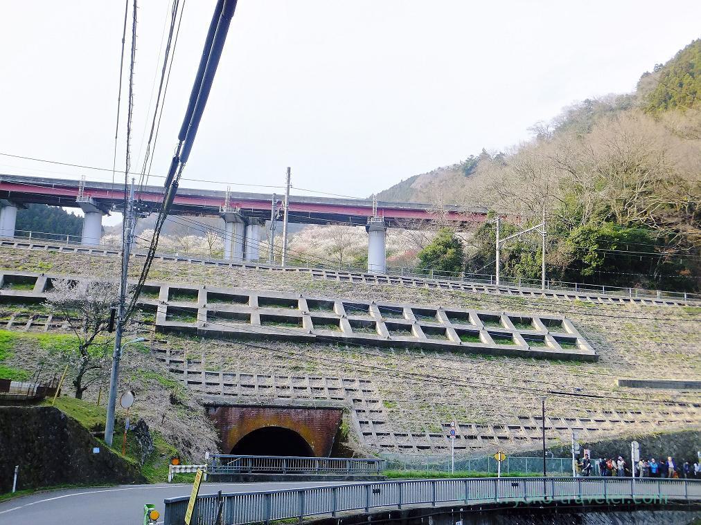 From bottom, Kogesawa plum grove (Takao)