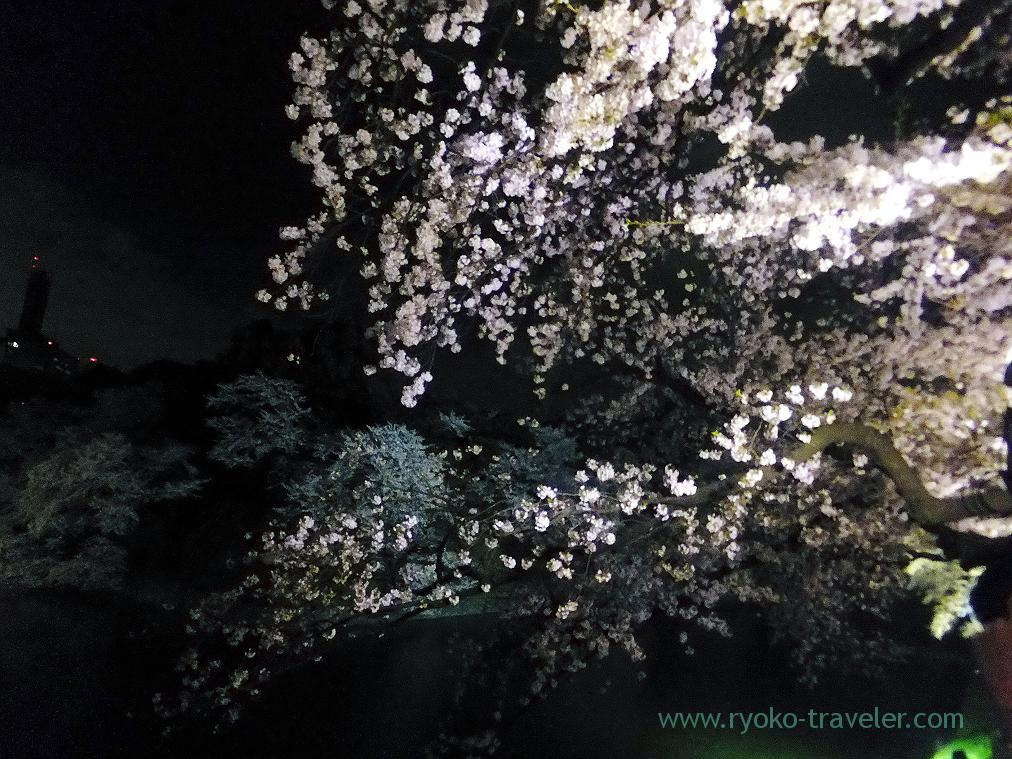 Night cherry blossoms 1, Chidorigafuchi (Kudanshita)