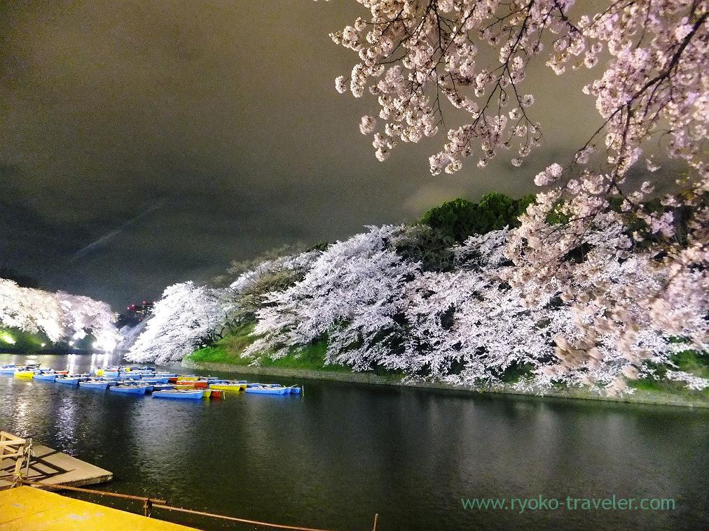 Night cherry blossoms 2, Chidorigafuchi (Kudanshita)