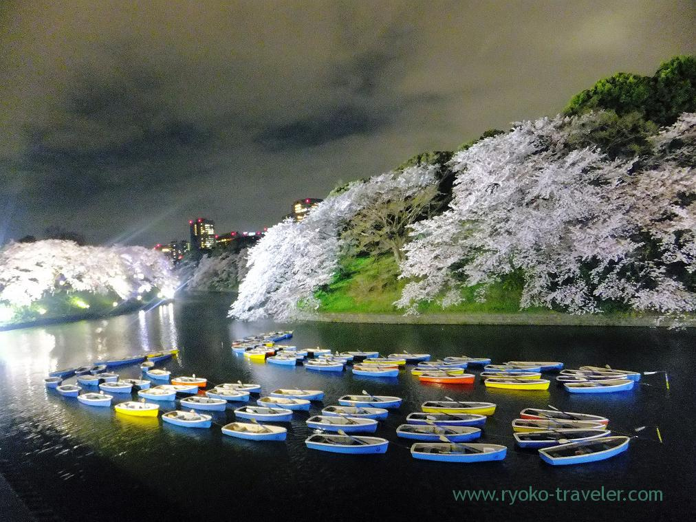 Night cherry blossoms 5, Chidorigafuchi (Kudanshita)