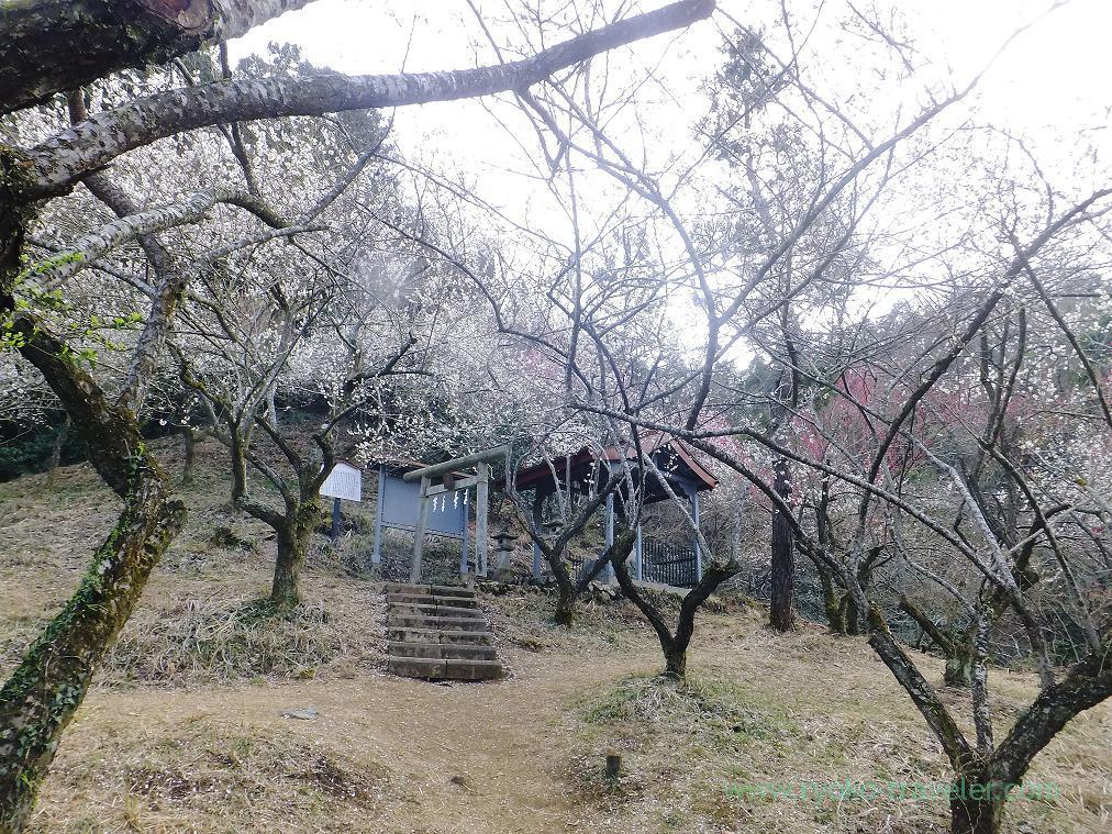 Takao Tenmangu shrine, Tenjin plum grove (Takao)