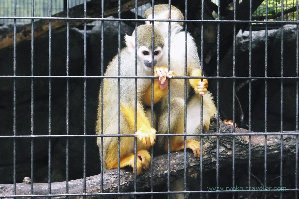 Small zoo, Gyosen park (Nishi-Kasai)