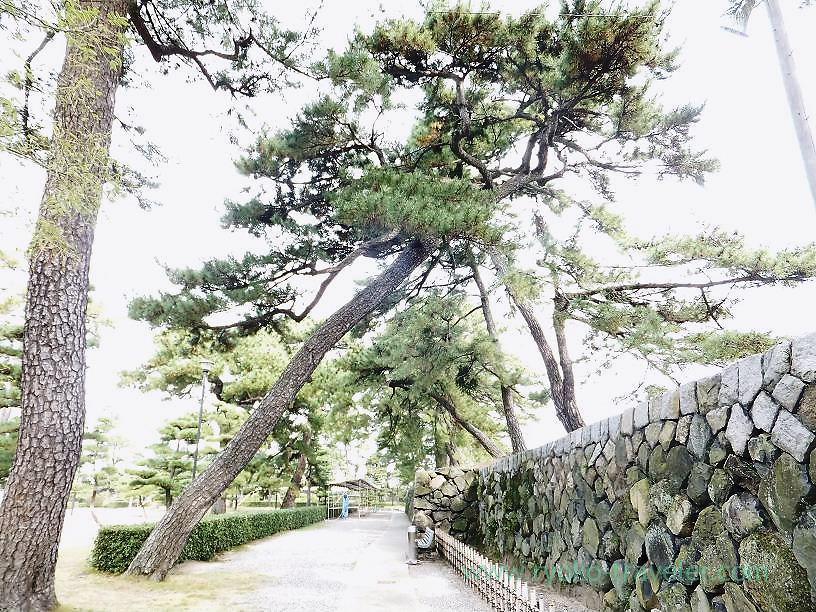 Amazing tree1, Tamamo garden, Takamatsu (Kagawa & Tokushima 2011)