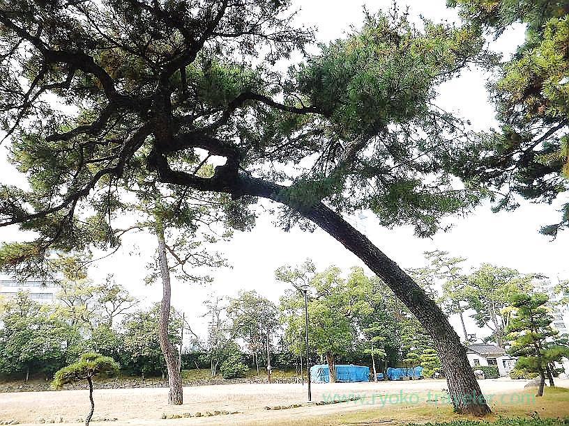 Amazing tree2, Tamamo garden, Takamatsu (Kagawa & Tokushima 2011)