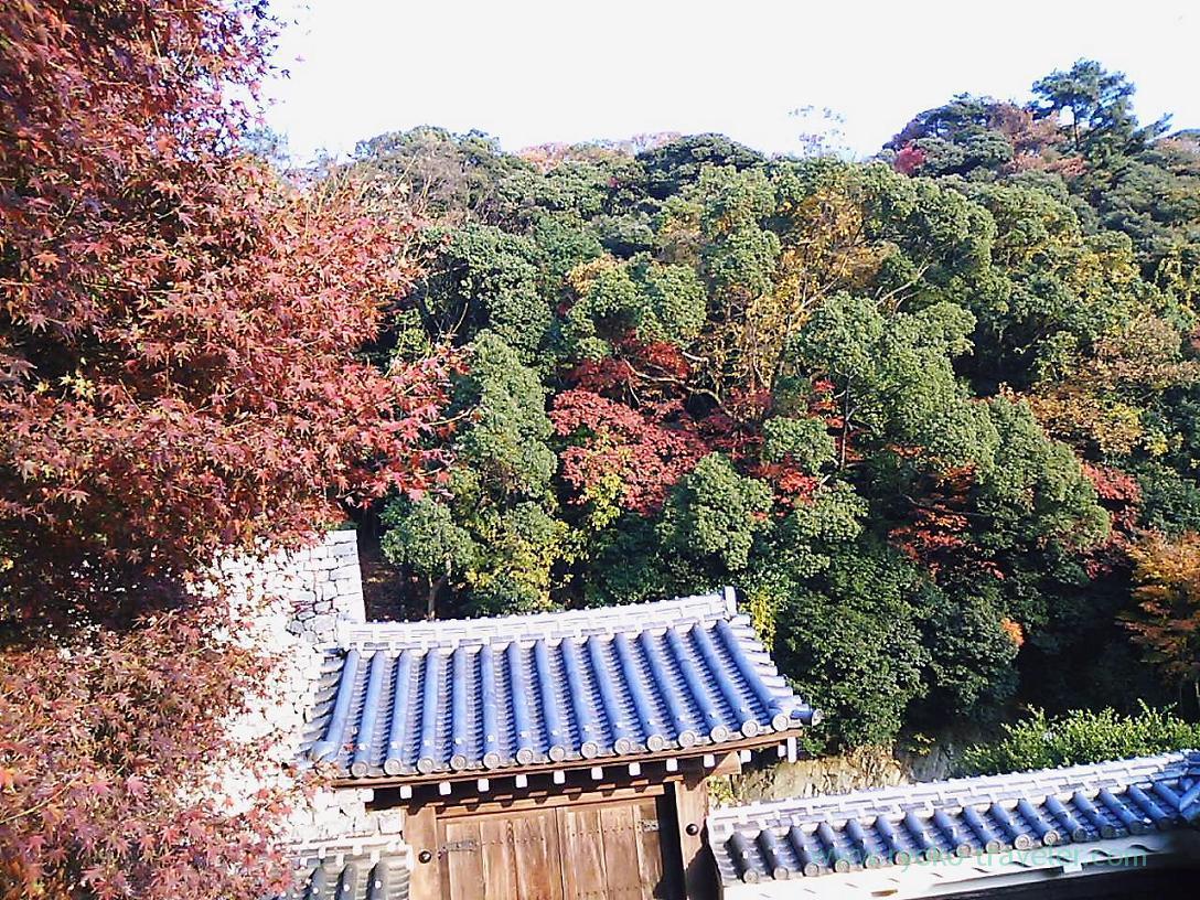 Maple leaves from Matsuyama castle ,Matsuyama castle, Matsuyama (Ehime 2010)
