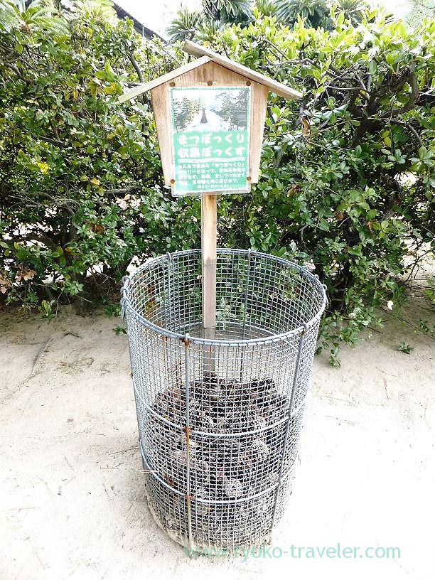 Pine cone collection, Tamamo garden, Takamatsu (Kagawa & Tokushima 2011)