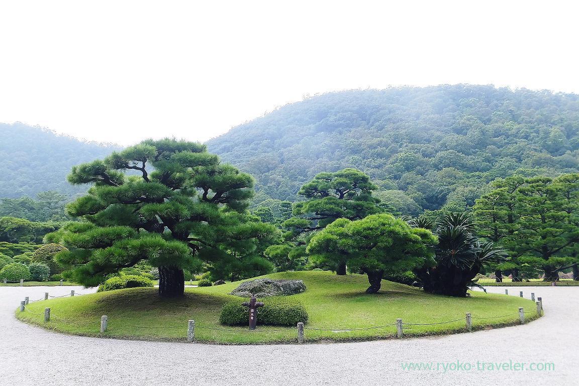 Pine tree close to the entrance, Ritsurin garden, Udon tour managed by Kotosan bus,(Takamatsu 2015)